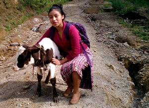 Vilma and young cow